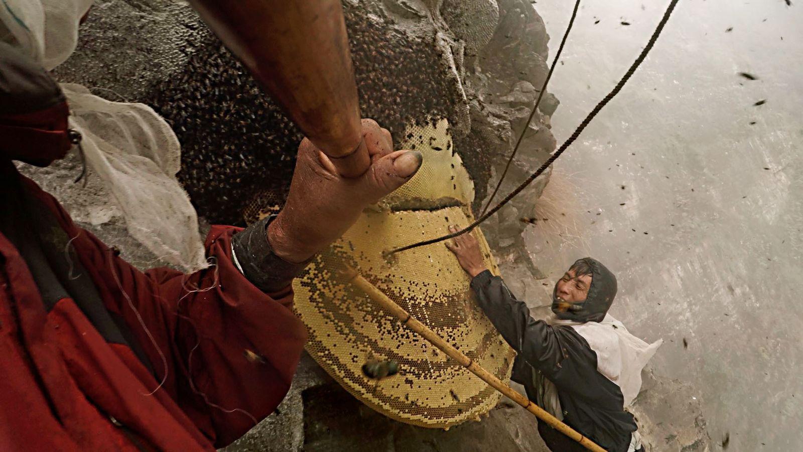 Asdhan Kulung (à droite) a noué une corde à une ruche qu'il maintient pendant que Mauli ...