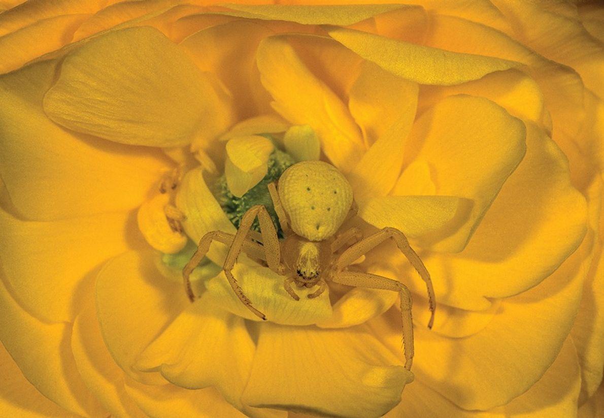 L'araignée qui aimait les fleurs