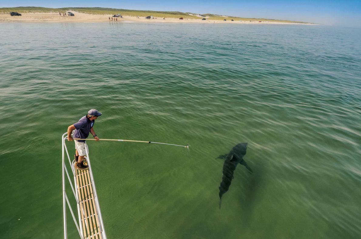 La plage aux requins
