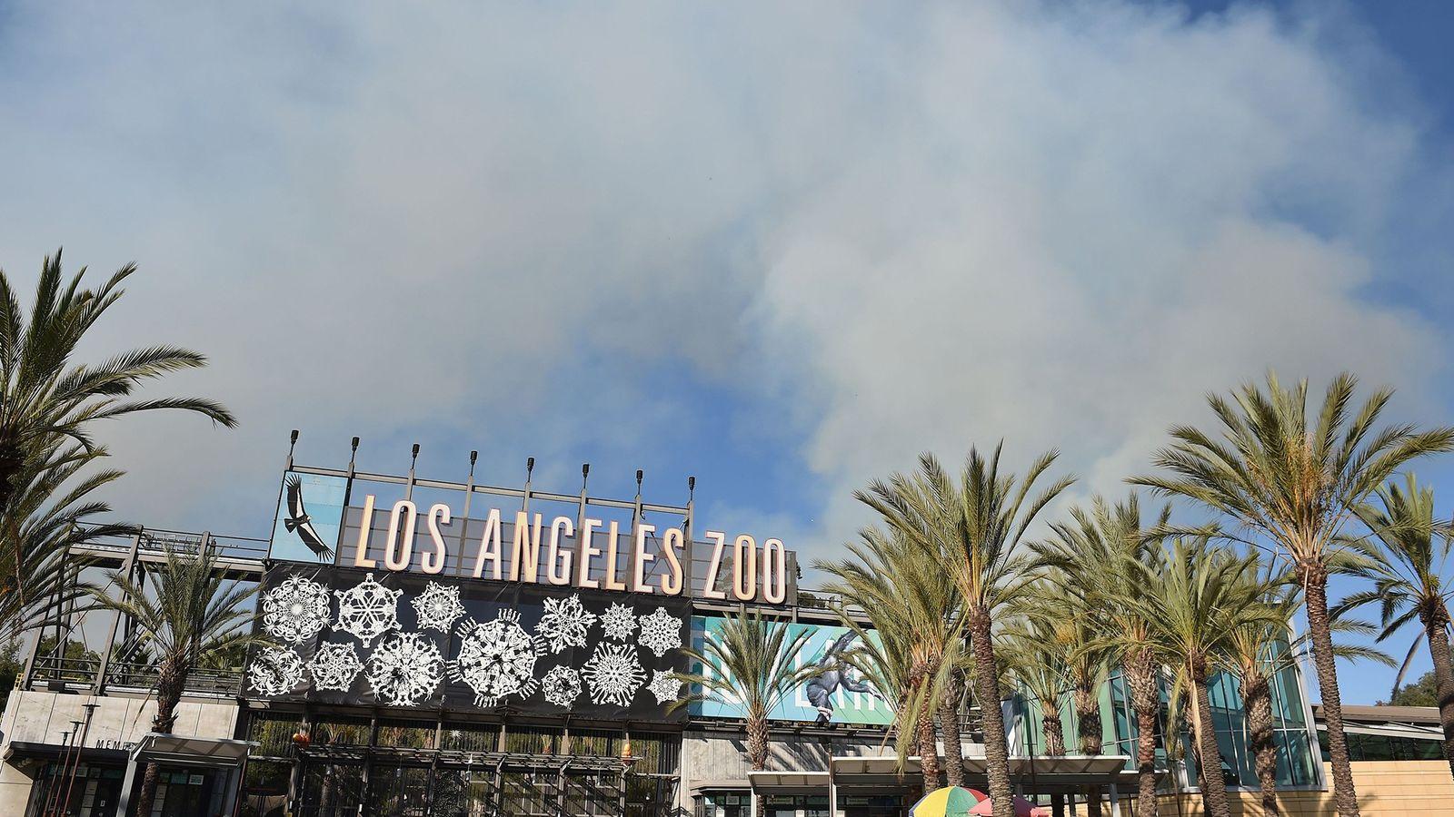 La fumée d'un incendie qui sévit à Griffith Park s'élève au-dessus du Zoo de Los Angeles, ...