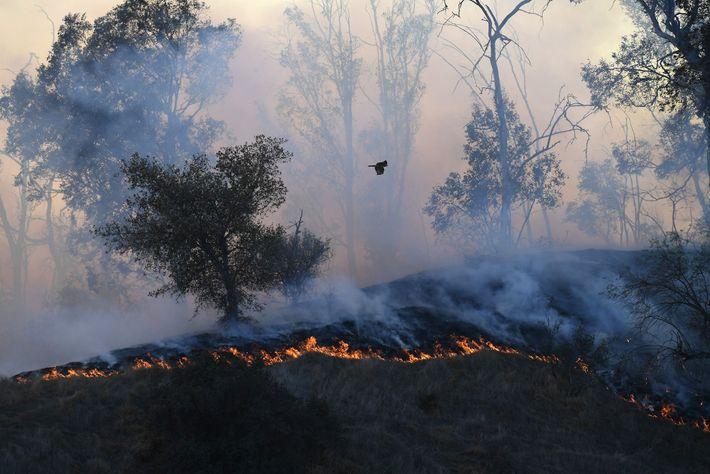 Un feu de forêt s'est déclaré tôt dans la matinée du 9 novembre à Griffith Park, ...
