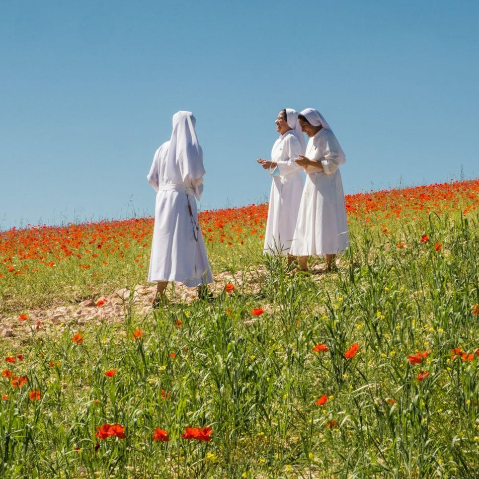 Reportage : comment l'Italie protège ses fleurs sauvages du tourisme de masse