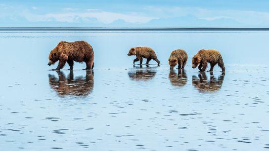 Situé à 160 kilomètres d'Anchorage, le parc et réserve de Lake Clark abrite des volcans, des ...