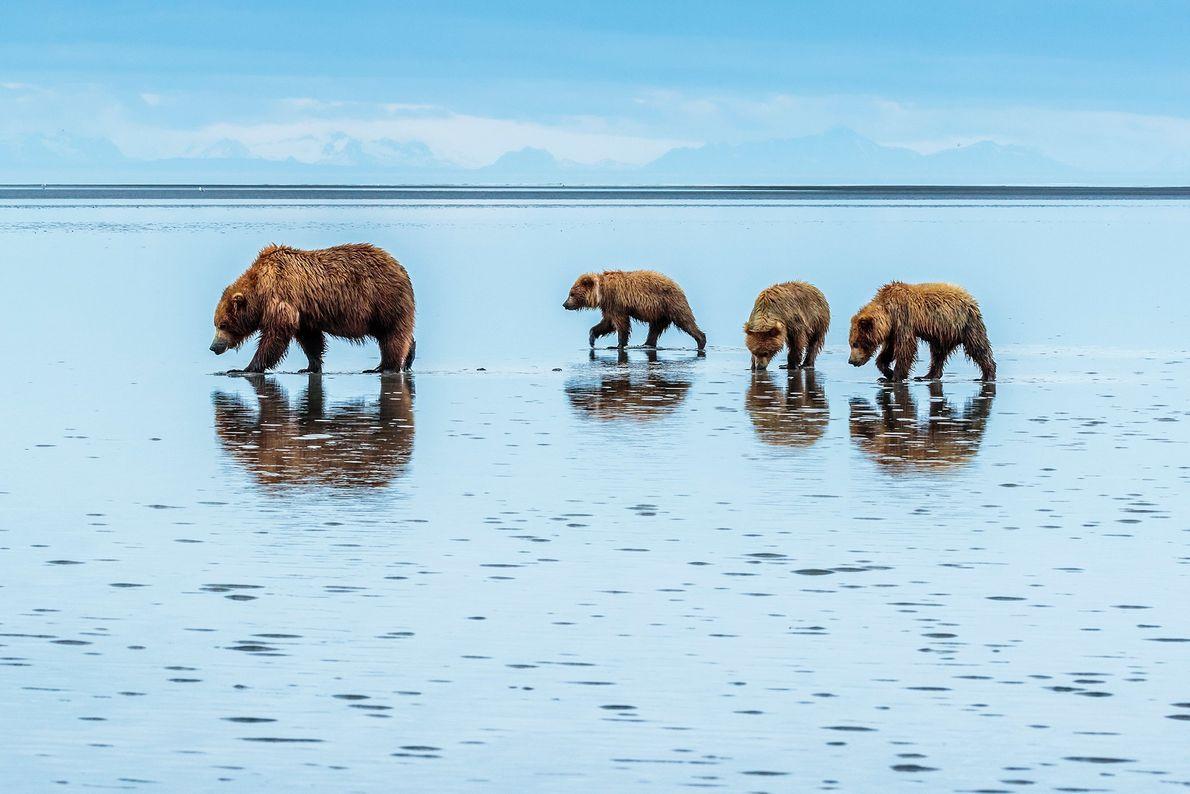 À environ 120 milles aériens au sud-ouest d'Anchorage, le parc national et réserve de Lake Clark, abritant des volcans, ...