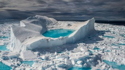 En Arctique, la banquise fond et de nouvelles espèces apparaissent