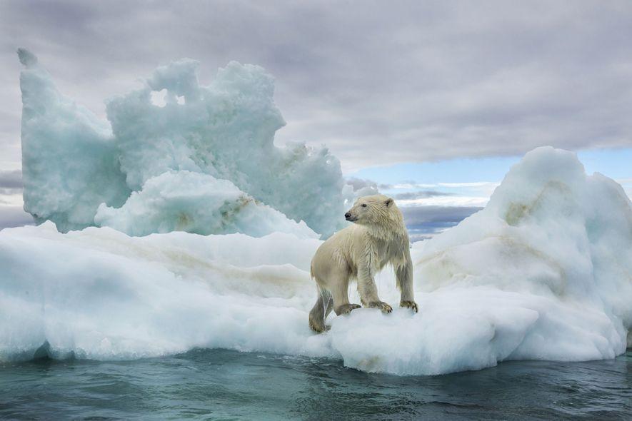 Arctique : comment sauver la dernière banquise ?