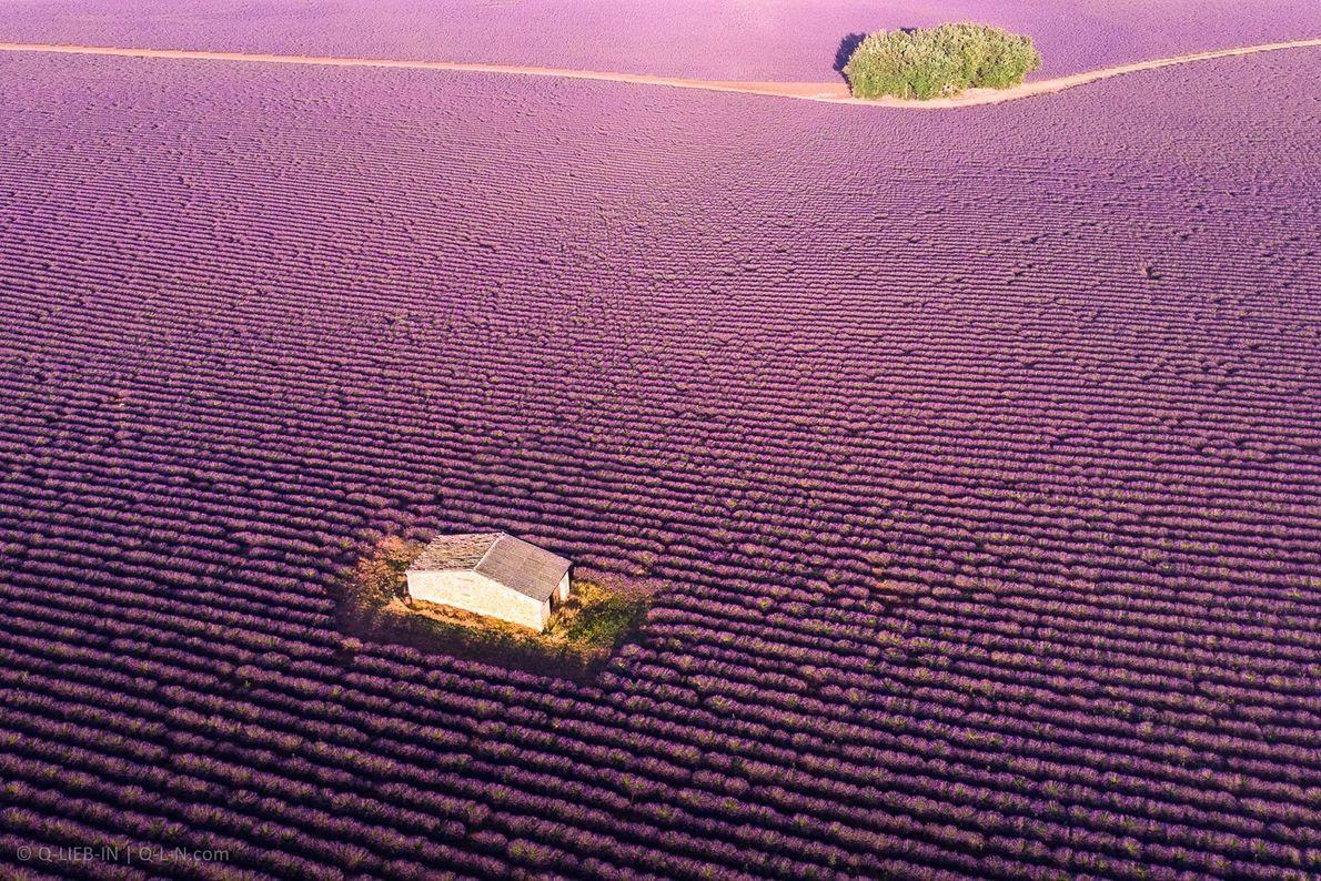 Chaque année en France, un océan de lavande inonde le paysage provençal. À Clansayes, la distillerie ...