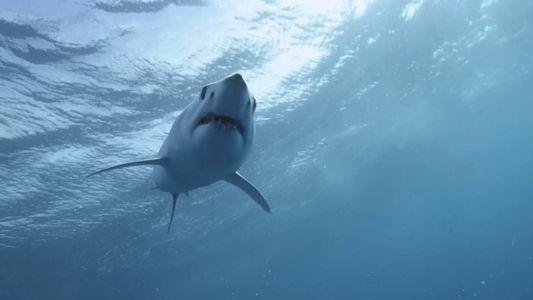 Un surfeur raconte comment un requin-tigre lui a arraché la jambe