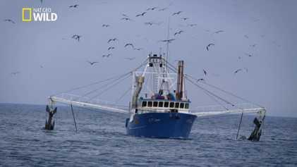 Les trafiquants de la pêche
