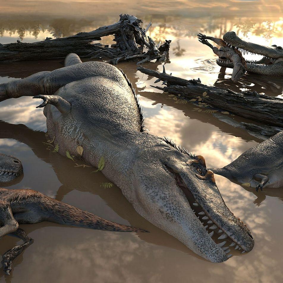 Découverte : les tyrannosaures auraient vécu en groupe