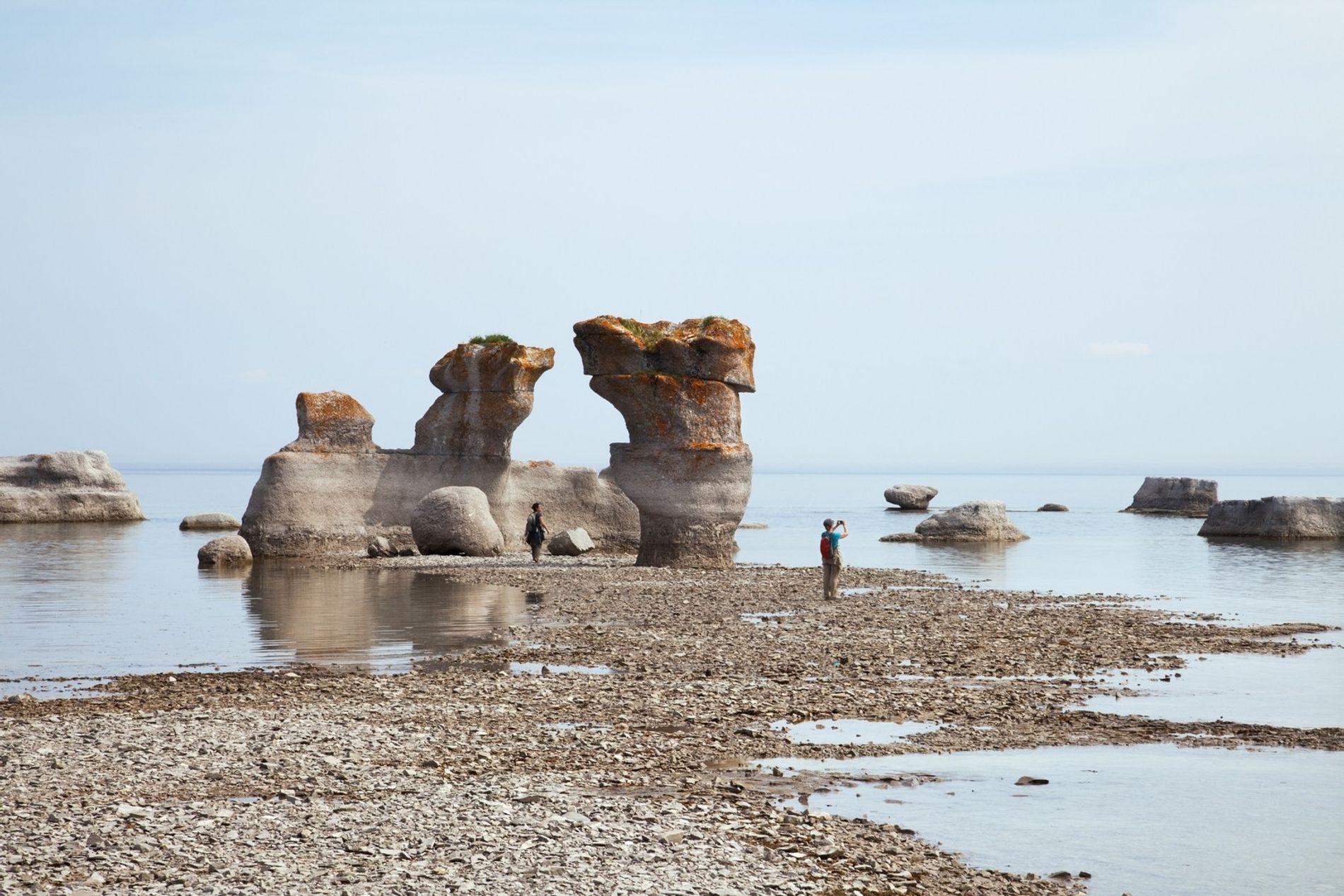 Les îles qui composent la Réserve de parc national de l'Archipel-de-Mingan, au Québec, abritent des macareux nidifiant ainsi que plusieurs espèces de baleines (dont des baleines bleues), qui nagent le long des côtes.