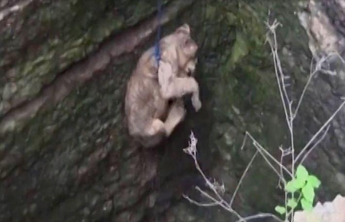 Vidéo : une lionçonne secourue après être tombée dans un puits de 25 mètres de profondeur
