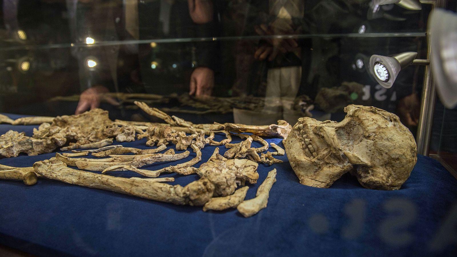 """Le squelette fossiled'australopithèque connu sous le nom de """"Little Foot"""" est désormais présenté au public."""