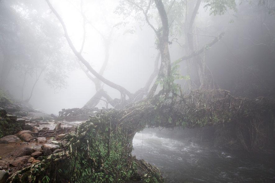 Un pont racine vivant enveloppé dans la brume dans les East Khasi Hills.
