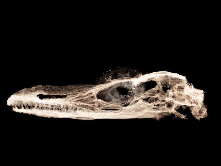 À l'aide des rayons X de haute énergie provenant d'un accélérateur de particules, les chercheurs ont ...