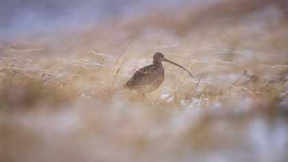Bien qu'illégale, la chasse des espèces protégées reste très courante