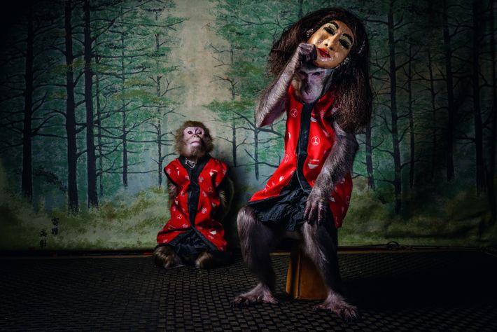 Quand les clients de la taverne Kayabuki, à Utsonomiya, ont fini de manger, les singes des ...