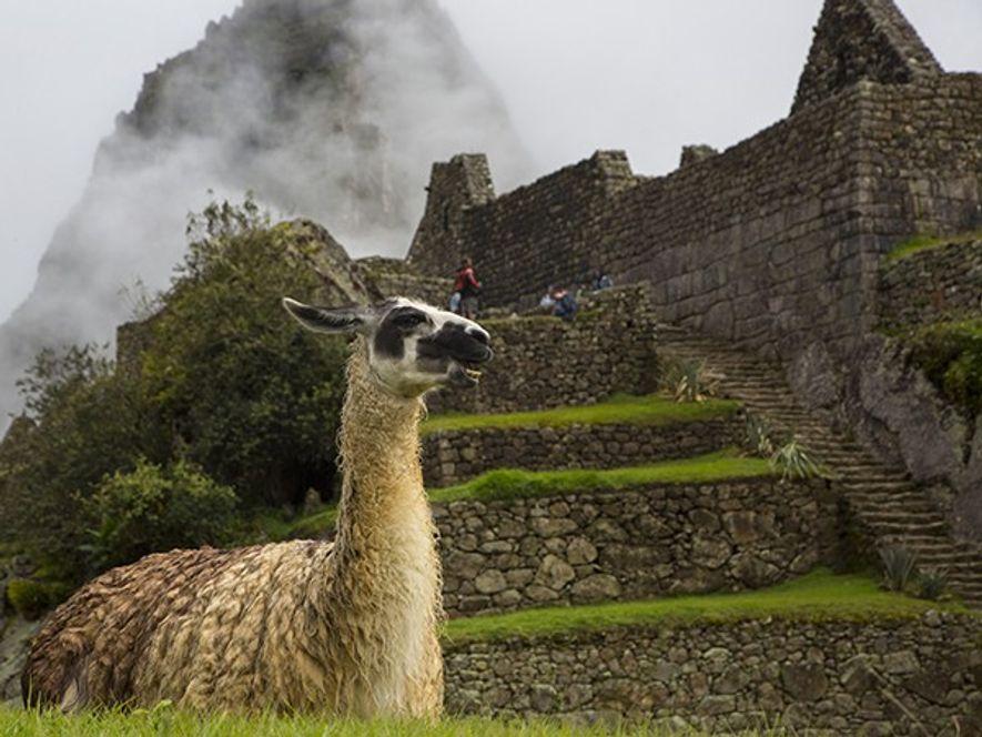 Le Machu Picchu, cité de pierre du 15e siècle cachée au cœur d'une vallée encaissée par ...