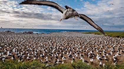 La faune exubérante de l'archipel des Malouines
