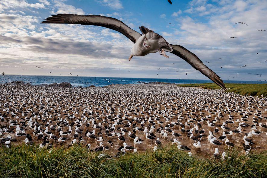L'archipel des Malouines en images