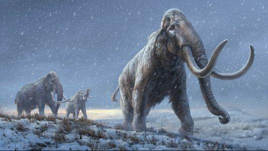 L'évolution des mammouths d'Amérique du Nord révélée par de nouvelles analyses ADN