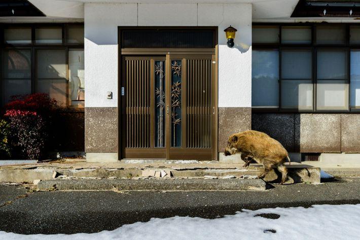 Fukushima-4