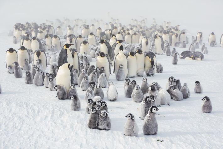 Un blizzard printanier balaie la glace que les jeunes commencent à explorer. Dans deux mois, leurs ...