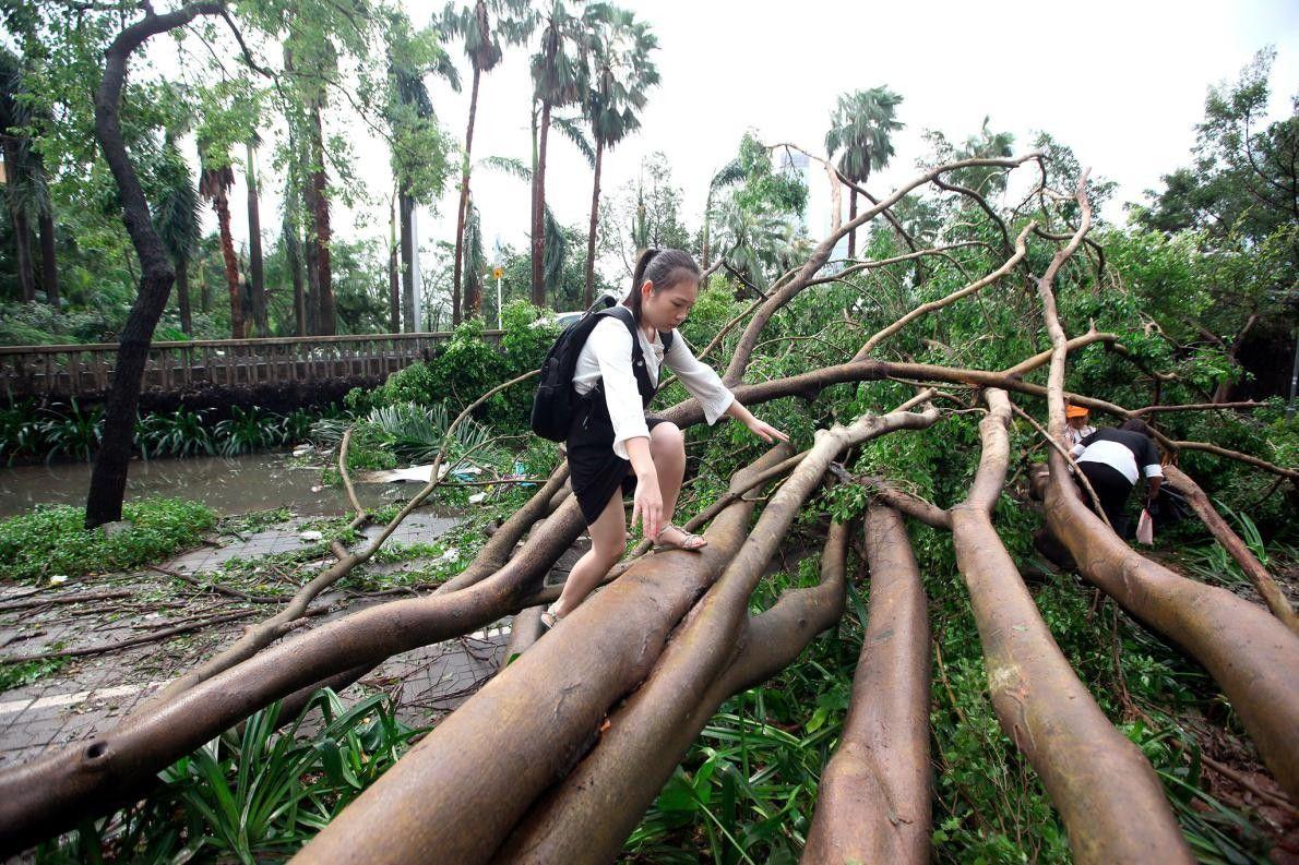 À Shenzen, des piétons essaient de traverser des arbres déracinés.