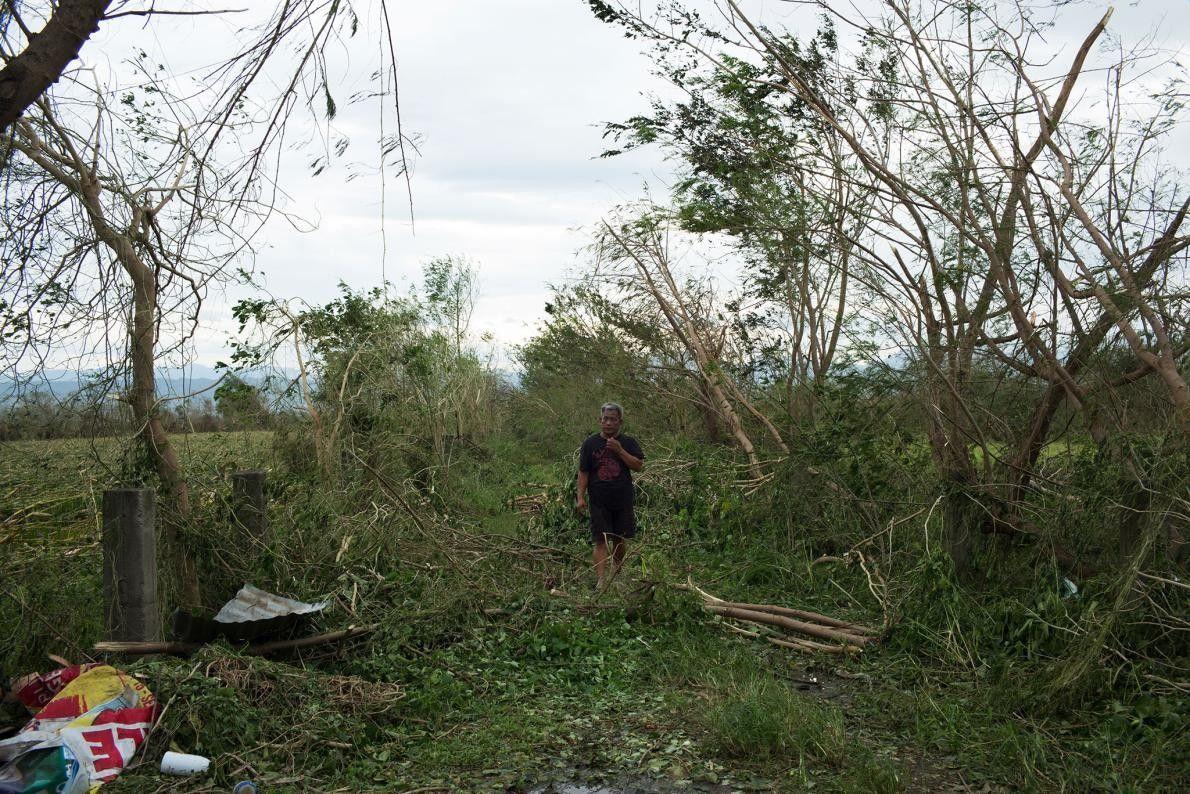 À Tuguegarao, dans la province de Cagayan, aux Philippines, un homme traverse un champ de maïs ...