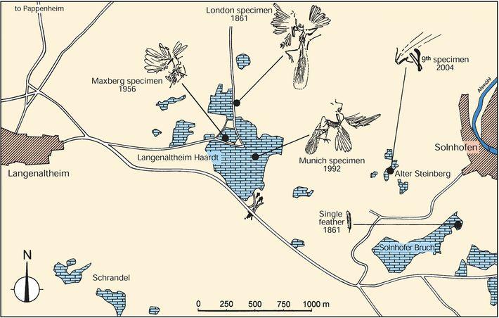 Cette carte des carrières allemande où ont été découverts quatre spécimens d'Archaeopteryx atteste de leur proximité ...