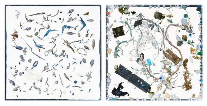 Dans ces deux images, la vie marine (à gauche) et les débris de plastique (à droite) ...