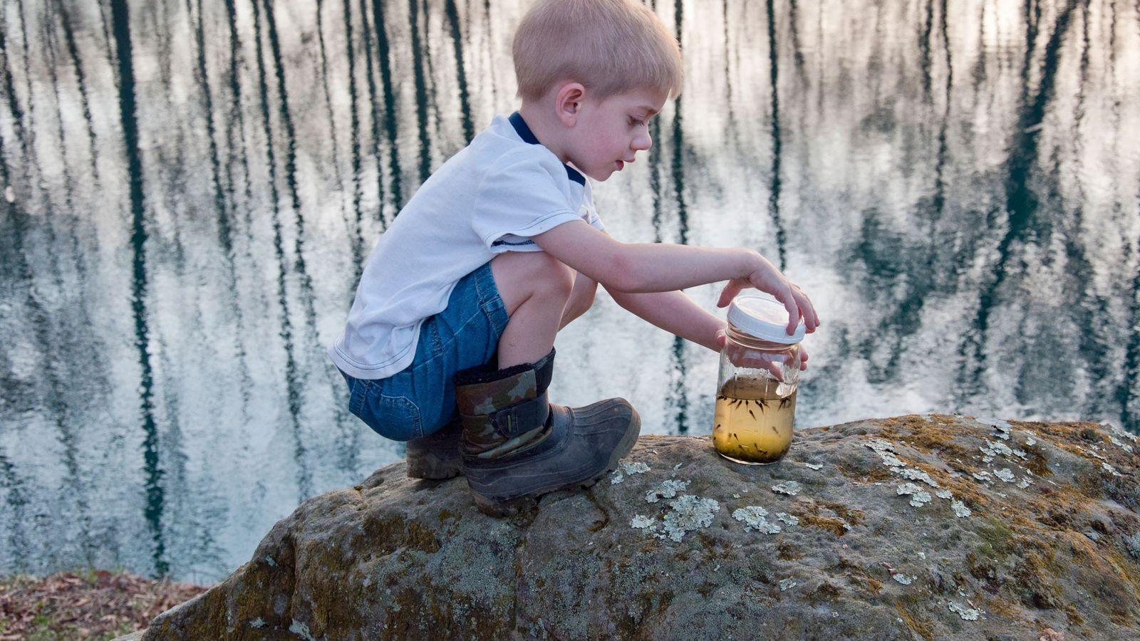 Mason s'apprête à relâcher des têtards qu'il avait collecté non loin.