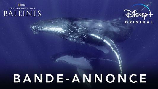 Les Secrets des Baleines - Bande annonce
