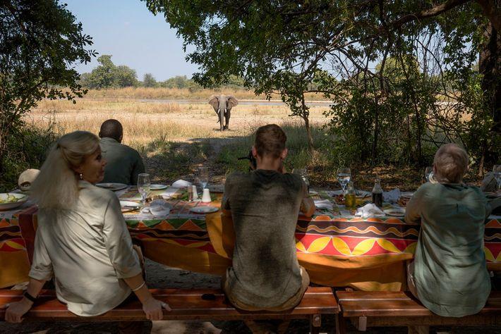 Les clients du camp Bilimungwe déjeunent sous le regard curieux d'un éléphant résident. Ce camp est ...