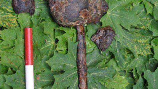 Des crânes du Mésolithique ont été retrouvés empalés en Suède