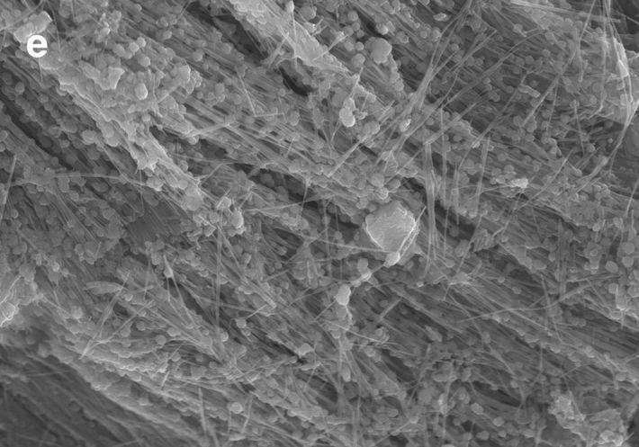 Une image en microscopie électronique à balayage du Sirena Deep montre des filaments à petite échelle ...