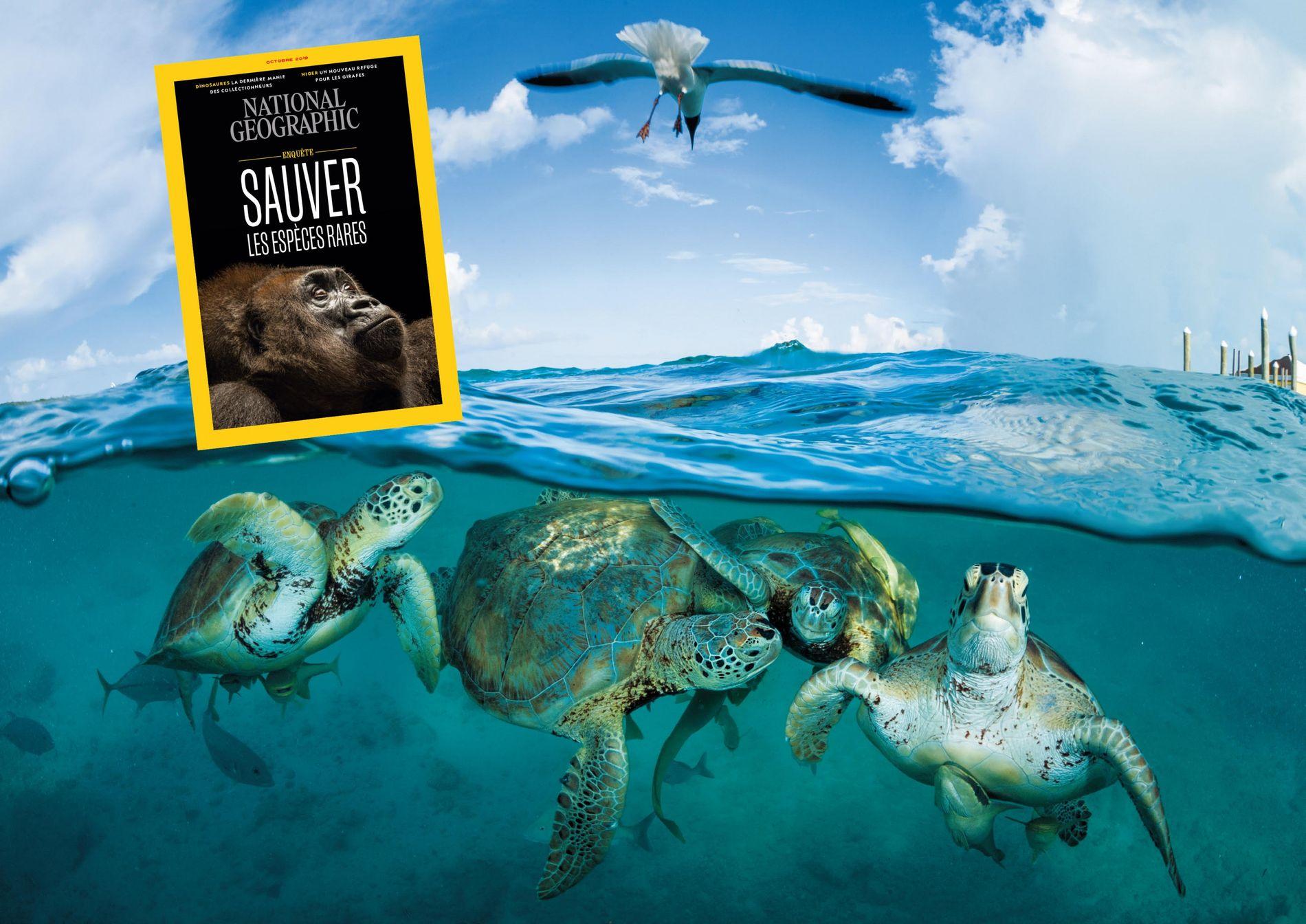 Sommaire du magazine National Geographic d'octobre 2019 : Sauver les espèces rares