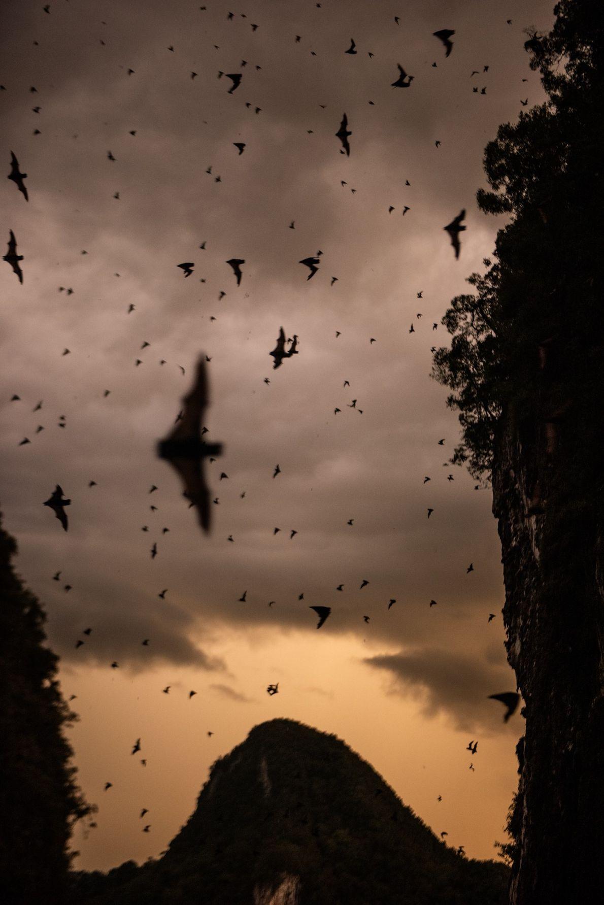Sur l'île de Bornéo, la grotte du Cerf abrite plus de deux millions de chauves-souris de ...