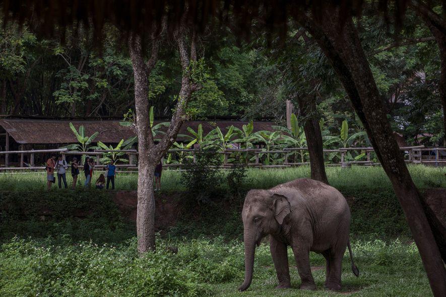 Elephant Valley Thailand « était le sanctuaire le plus responsable que nous ayons visité, » indique ...