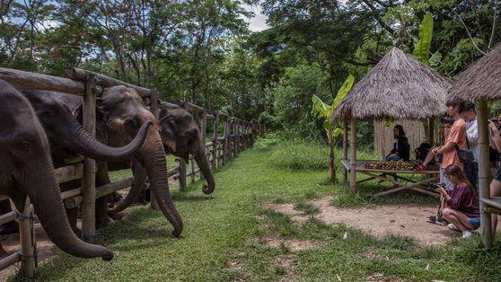 Les dérives du tourisme animalier : les conclusions de notre grande enquête