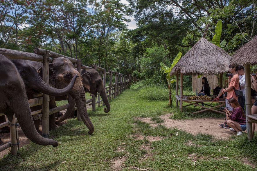 Dans le domaine Elephant Valley Thailand à Chiang Rai, il est demandé aux touristes de rester ...