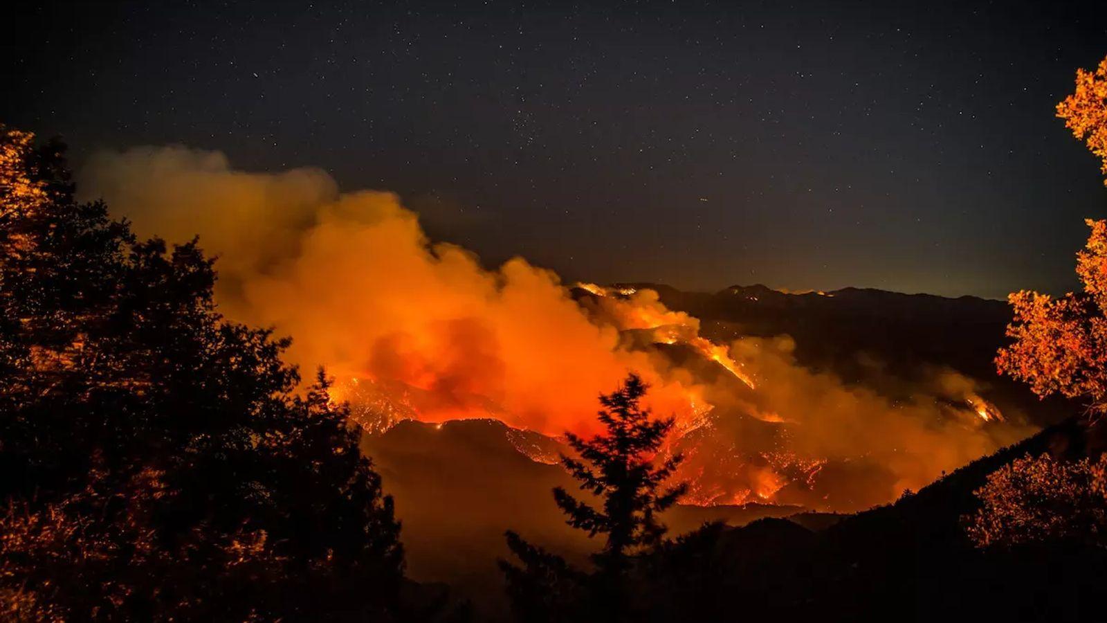 L'année dernière, lors de la plus terrible saison des feux de forêt, les flammes et la ...