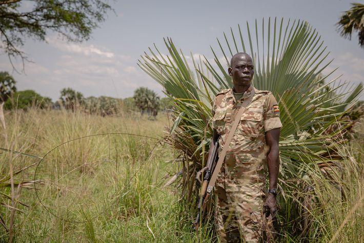 Le ranger Odokonyero Christopher se tient à côté d'un collet installé dans le parc de Murchison ...