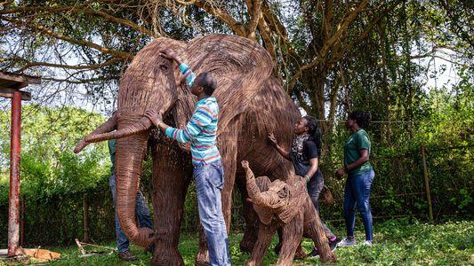 Ouganda: ils braconnaient les animaux sauvages, aujourd'hui ils les célèbrent