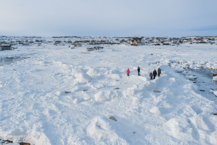 people-near-harp-seal-pups