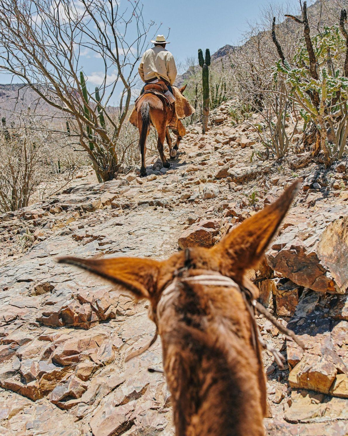 Chevauchant sur le Camino Real, Ignacio Arce Arce, dit « Nacho », passe à proximité du Rancho Aguajito de las Mujeres ...