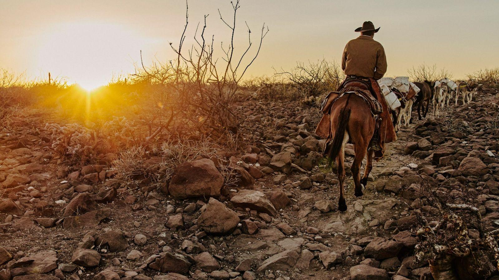 Eleonary Arce Aguilar, dit « Nary », mène ses mules jusqu'à chez lui, le Rancho Mesa San Esteban situé dans la Sierra de ...