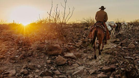 Mexique : le mode de vie des vaqueros n'a jamais été aussi menacé