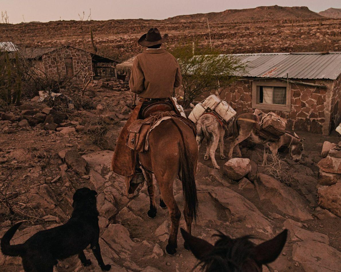 Nary mène ses mules jusqu'à chez lui, au Rancho Mesa San Esteban situé dans la Sierra de San Francisco, en ...