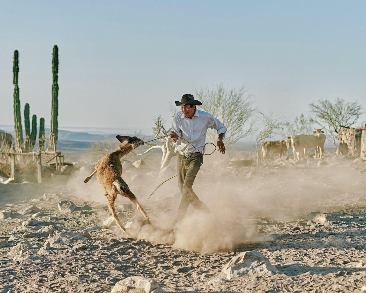 Eleonary Arce Aguilar attrape au lasso son cerf de compagnie au Rancho Mesa San Esteban situé dans la Sierra de San Francisco, ...